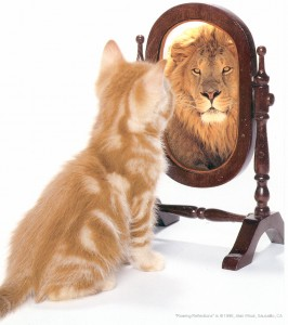 see-yourself-cat-mirror-lion